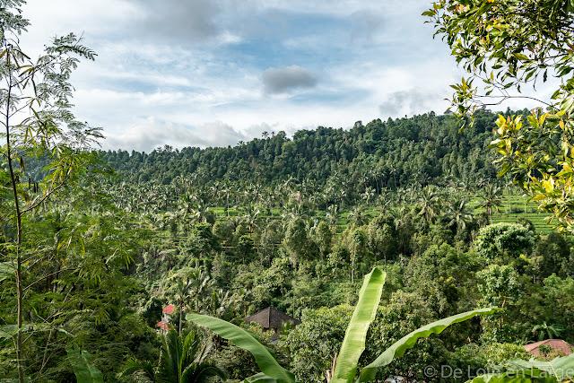 Région de Munduk - Bali