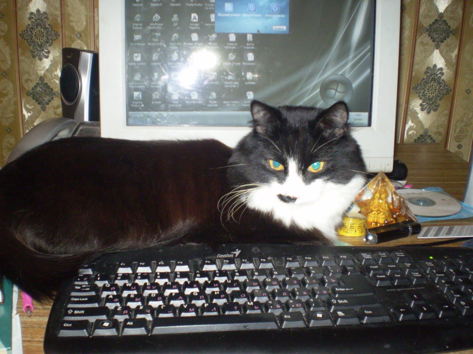 Кострированные коты и секс