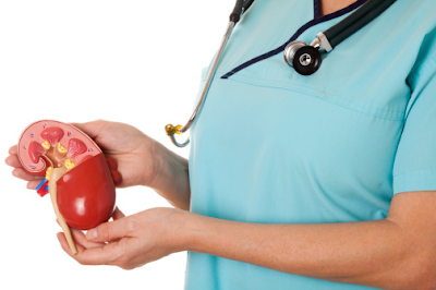 7 Jenis Obat Herbal Alami Untuk Mengobati Batu Ginjal