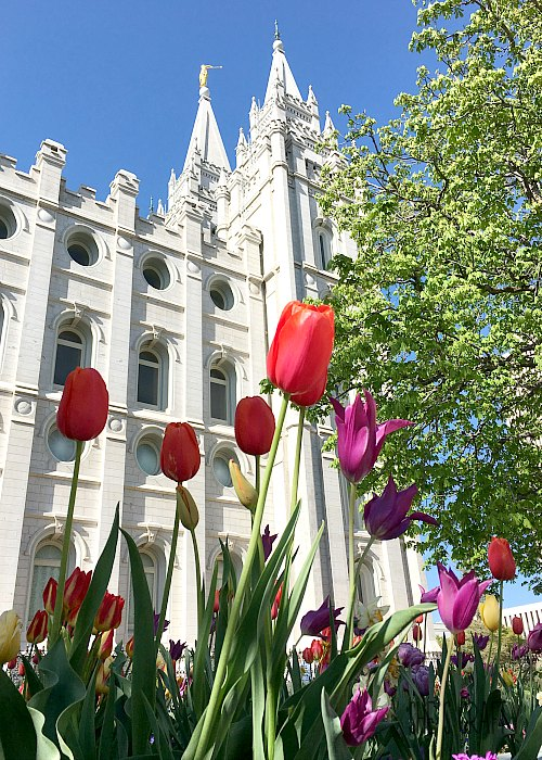 flowers at salt lake city temple, lds temple, Temple Square
