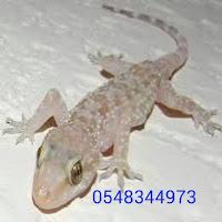 مكافحة الوزغ والفئران 0548344973