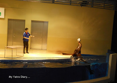 Sea lions performing at the Epson Aquarium, Prince Hotel Shinagawa - Japan