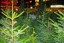 Hamburg und norddeutschland - Weihnachtsbaumverkauf hamburg ...