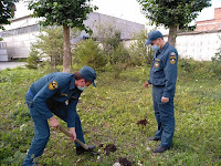 (ФОТО)Молодые клены высажены на территории пожарной части.