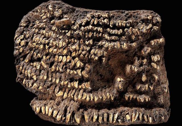 Tas Tertua (4.500 tahun)
