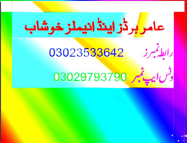 Amir Birds And Animals Khushab - Online selling Bakra