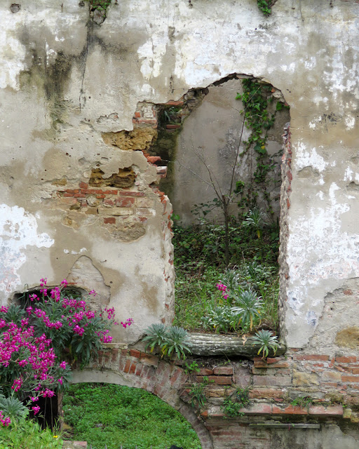 Flowers and ruins, Fortezza Nuova, Livorno