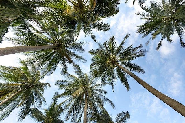 Visita Playa del Carmen, uno de los destinos más famosos del mundo