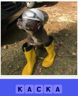 стоит собака на земле в каске и в резиновых сапогах желтого цвета