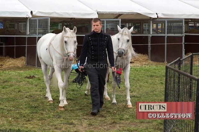 deux beau chevaux blanc en compagnie d'un joli palefrenier