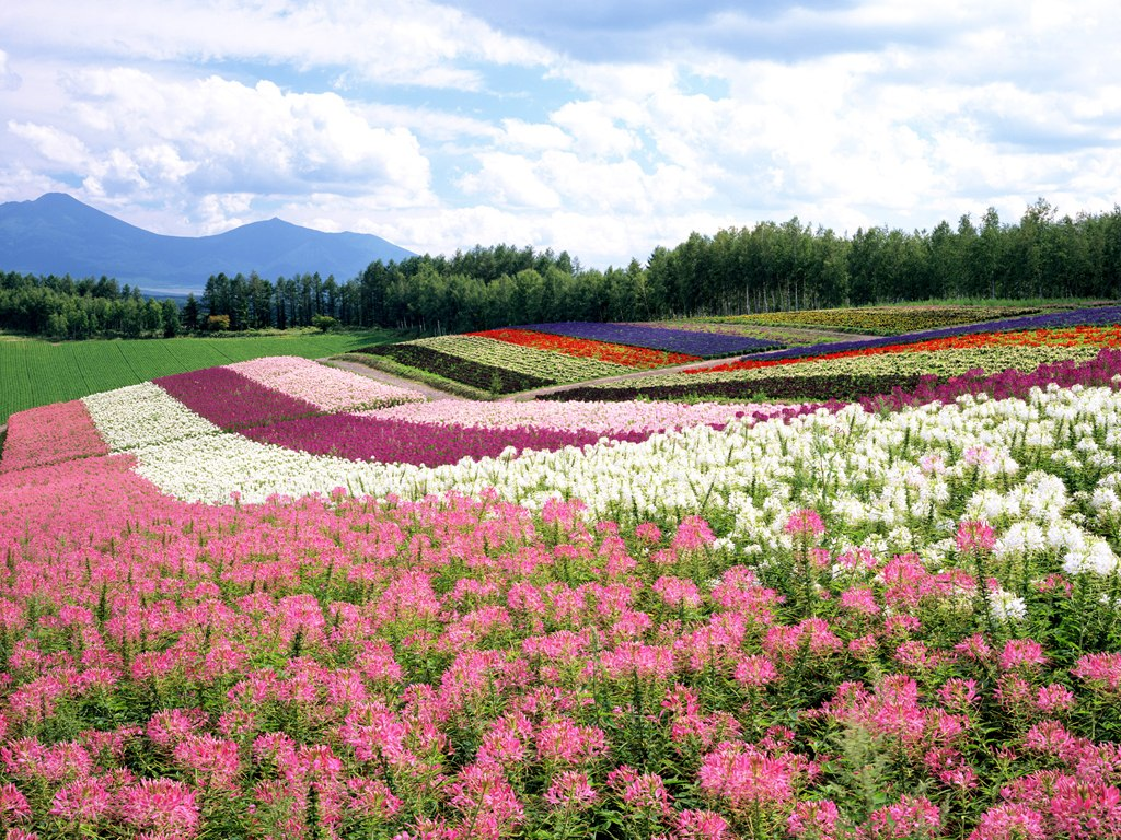 Japan Garden Flowers: Travel Info And Travel Guide