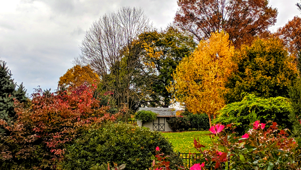 image of a shed visible across several backyards, peeking through brightly colored fall foliage on a variety of trees