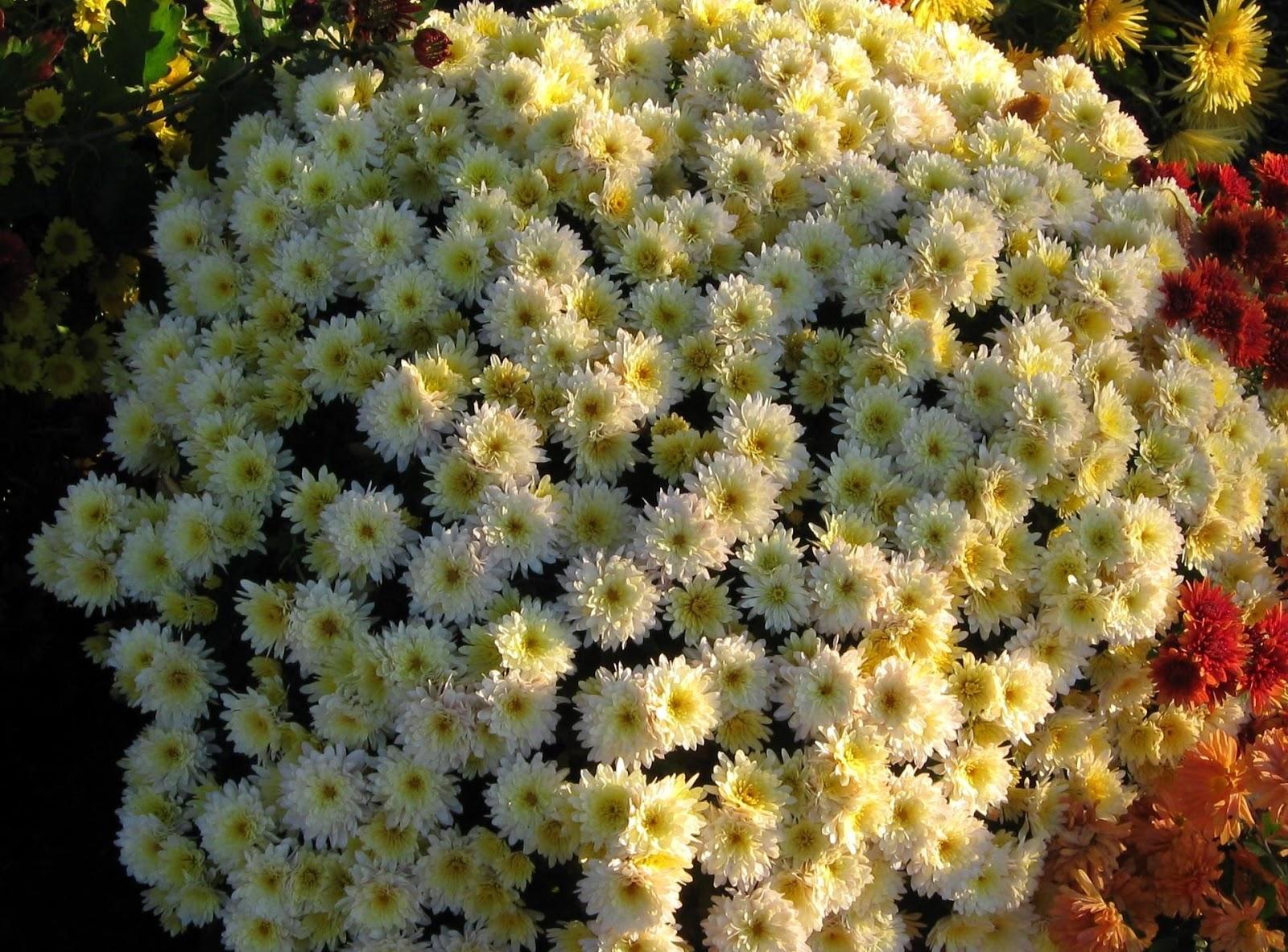 Beautiful Flowers Wallpapers, Flowers Wallpapers, Beautiful Wallpapers, Wallpapers,خلفيات زهور جميلة,خلفيات