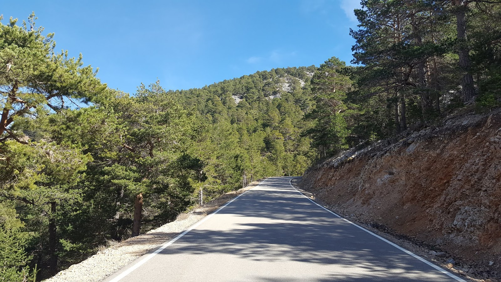 Straight stretch of tree-lined road on climb to Javalambre Astrophysical Observatory