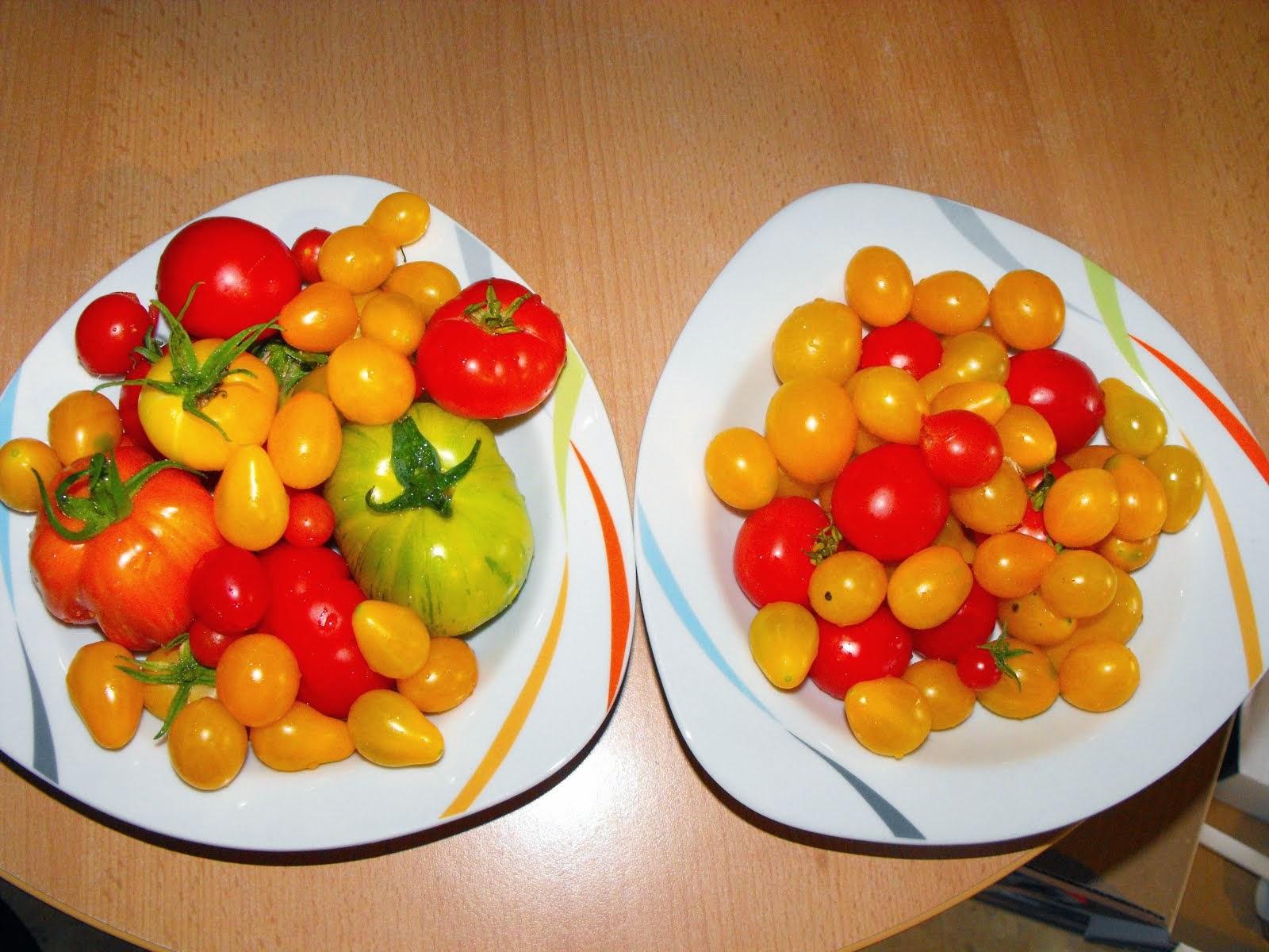 Selber Macherin Tomaten Selber Zuchten Teil 1 Richtig Aussaen