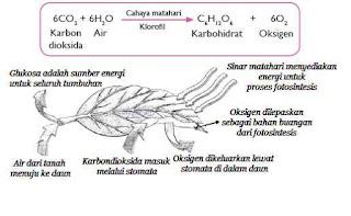 Makalah Fotosintesis Contoh Makalah