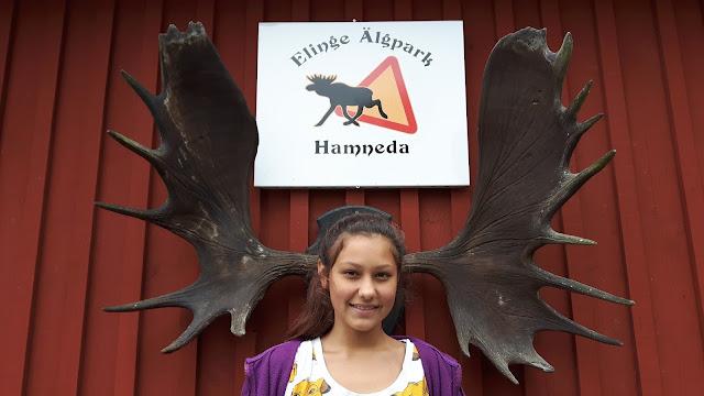 Elche zum Anfassen – Natur erleben in Schweden