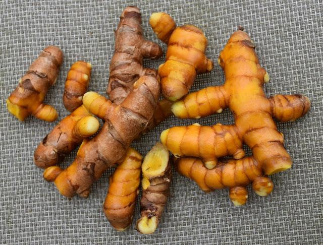 Washed homegrown turmeric rhizomes