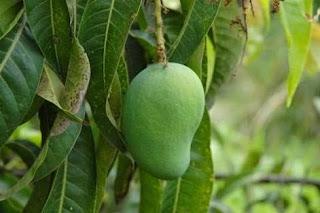 http://www.katasaya.net/2016/03/buah-buahan-berikut-ini-dapat-membantu.html?m=1