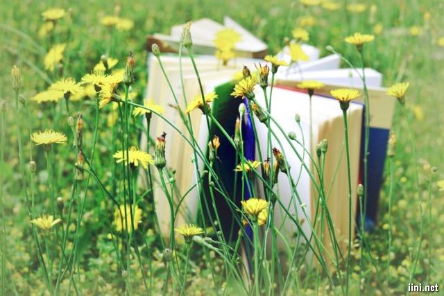 vườn hoa vàng và sách