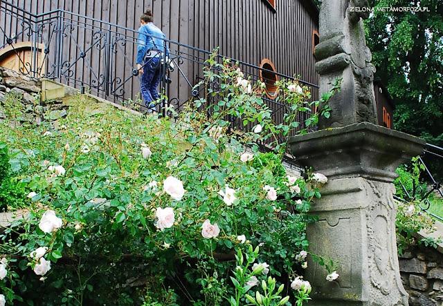 zielona metamorfoza.pl, róże do ogrodu, ogrody, projekty ogródów