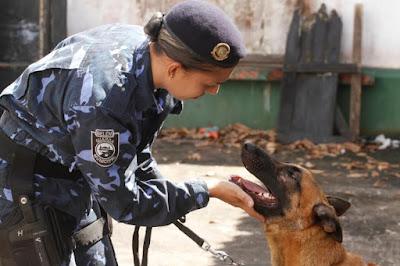 Trabalho da Guarda Municipal de Belém (PA) com cães é referência no combate ao tráfico de drogas