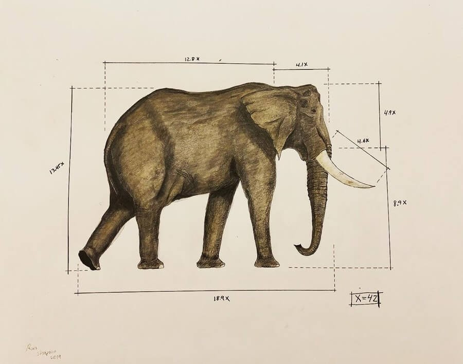 08-Elephant-Ran-Shapira-Animal-Drawings-from-a-Sculptor-s-Perspective-www-designstack-co