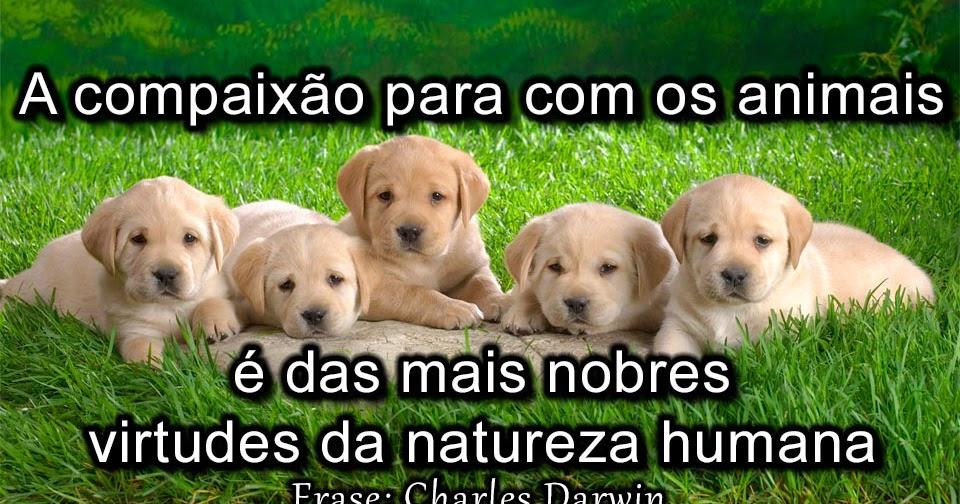 Well-known Frases sobre Animais e Natureza - Frases Curtas KF97
