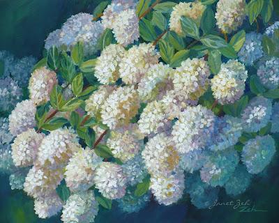 Oil painting of PeeGee hydrangeas