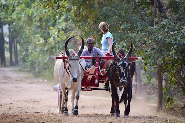 bullcart pollachi tamil nadu