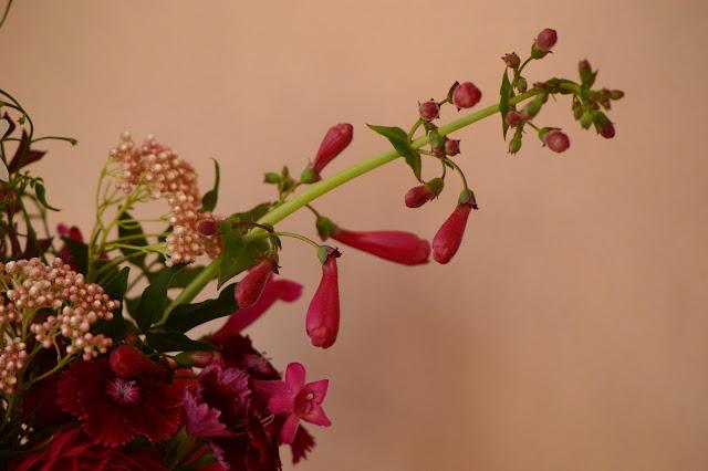 penstemon pseudospectabilis, monday vase, ranunculus, cutflower, dianthus, penstemon, small sunny garden, desert garden, amy myers, ozothamnus diosmifolius