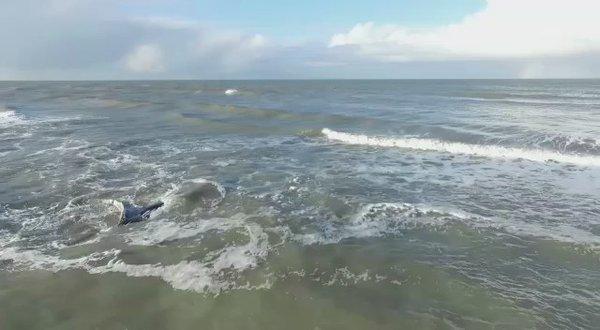 Rescataron a la ballena encallada en Mar del Tuyú QFXg_R8xJ0uuE3ma