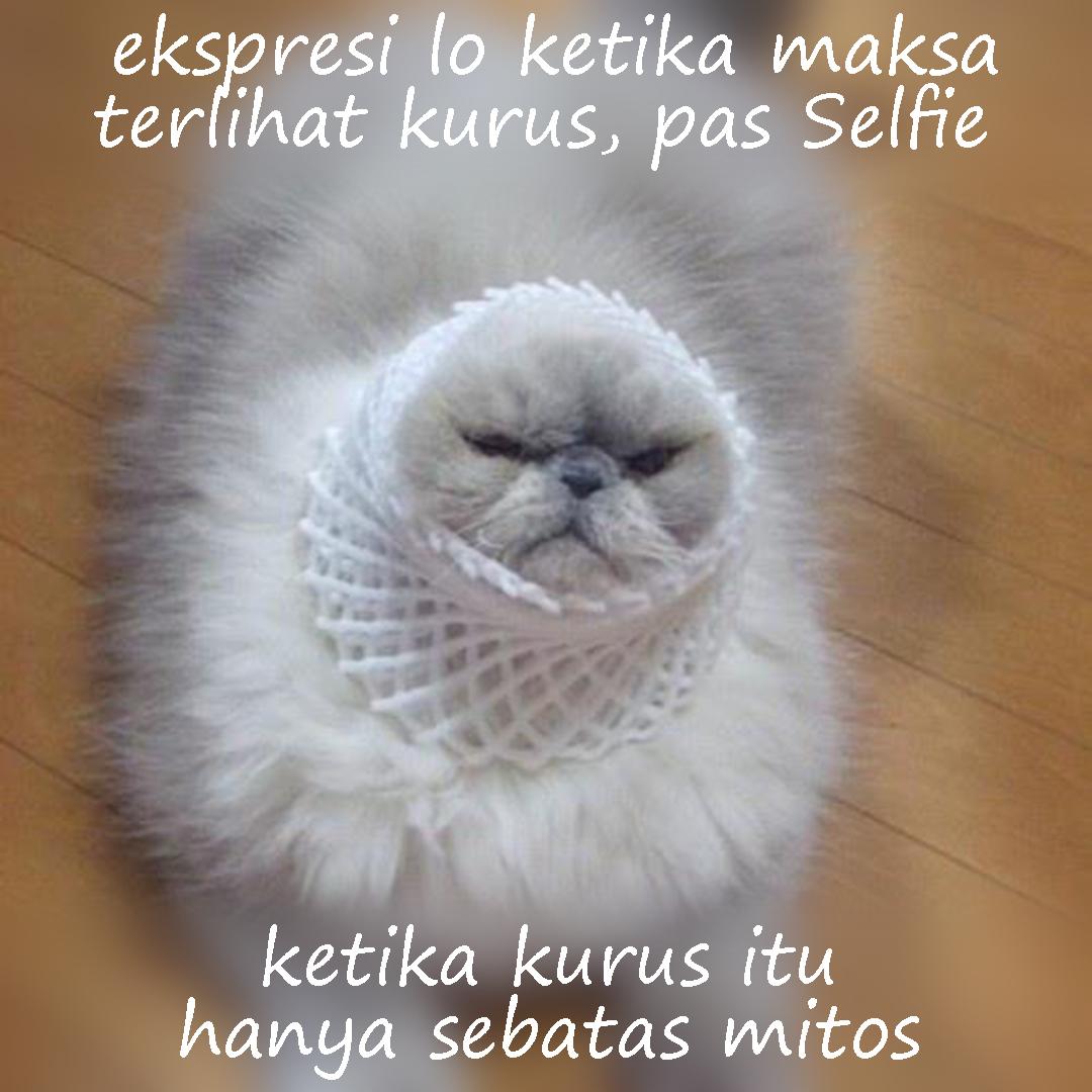 Meme Lucu cewek gendut kucing meong