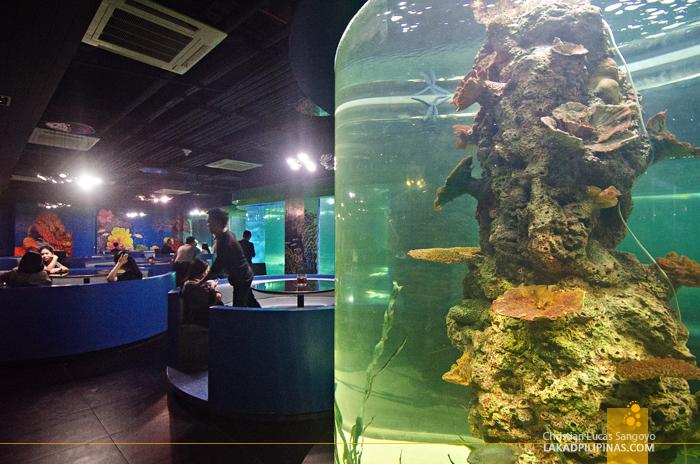 Crown Regency Resort & Convention Center Boracay Oceanarium Restaurant
