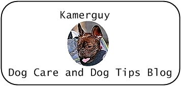 Dogs| Care and Tips