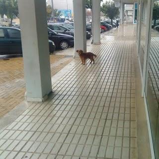 entregar um cão...