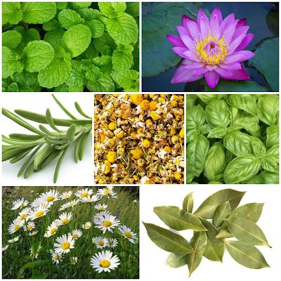 blog-inspirando-garotas-plantas-flores-ervas