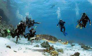 Ras Mohamed Excursions in Sharm El Sheikh