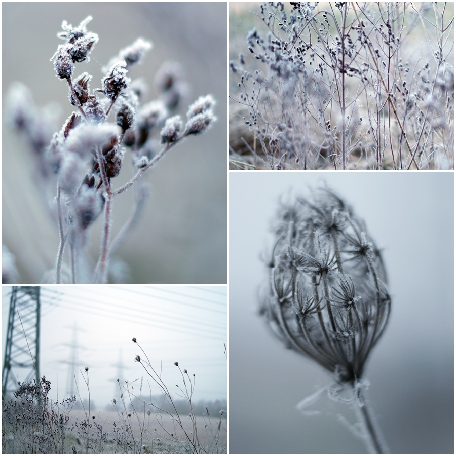 Blog + Fotografie by it's me! - ein Feld im Frost