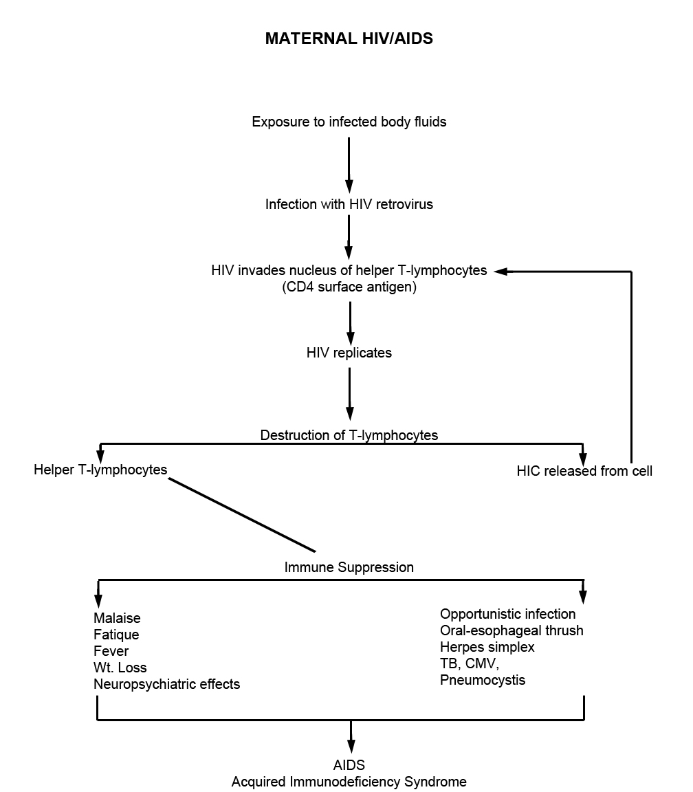hight resolution of maternal hiv aids pathophysiology