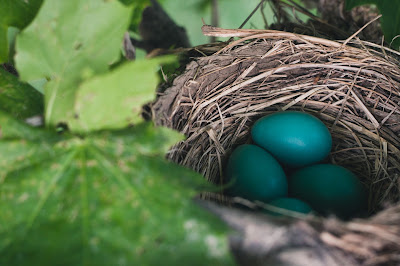 Photo of nest by Ian Baldwin on Unsplash