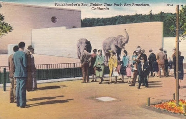 Fleishhacker's Zoo, Golden Gate Park, San Francisco, CA. Hand colored postcard. Zoo visitors at the Elephant pen. The Zoo Houdinis and other stories. marchmatron.com