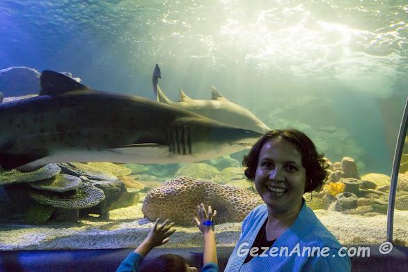 bir köpek balığı ile burun buruna gelmiş ben, Sea Life Akvaryum İstanbul
