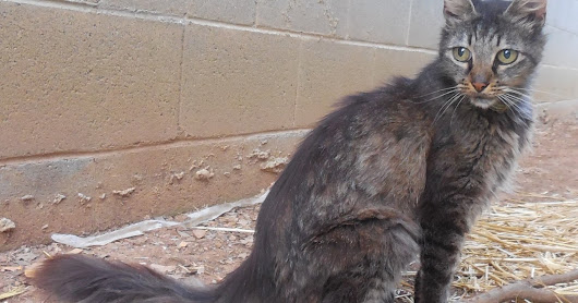 Paws and Claws Feline Rescue: Do You Know This Kitty?