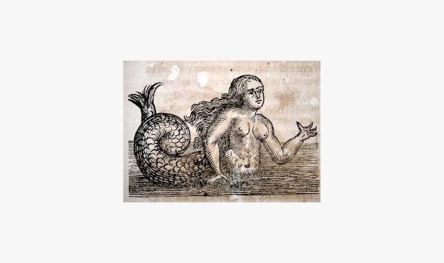 Anthurus d'Archer - Petite féérie maritime