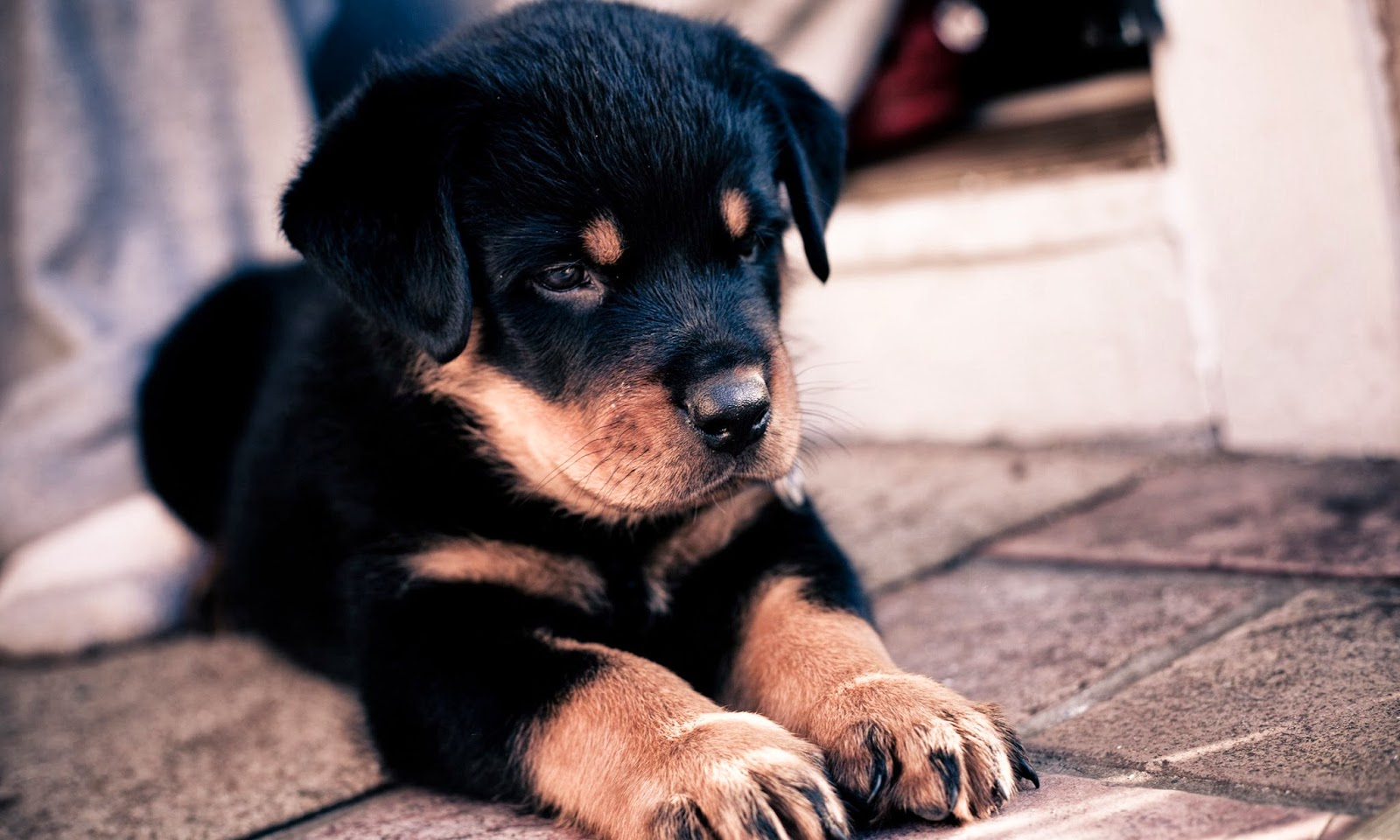 Dogs And Puppies Wallpaper Puppy Photograp...