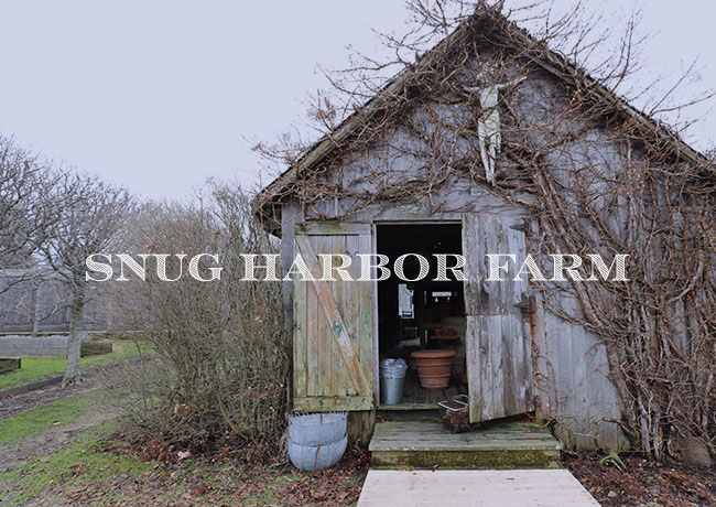 MY SPRING VISIT TO SNUG HARBOR FARM IN MAINE
