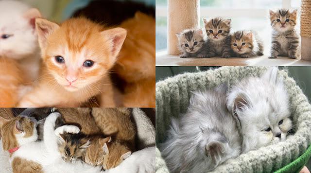 take-care-of-kittens