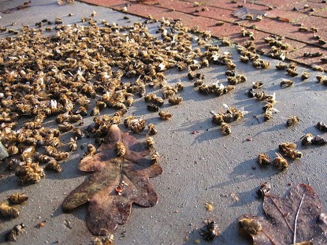 Aς είναι η αρχή του τέλους για τις μαζικές δολοφονίες μελισσιών... Κοινοποιήστε!