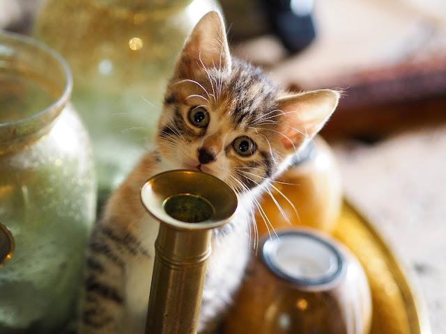 Kitten Reddit 7 weken